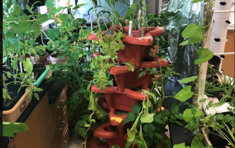Tower Garden leads to an exciting second semester